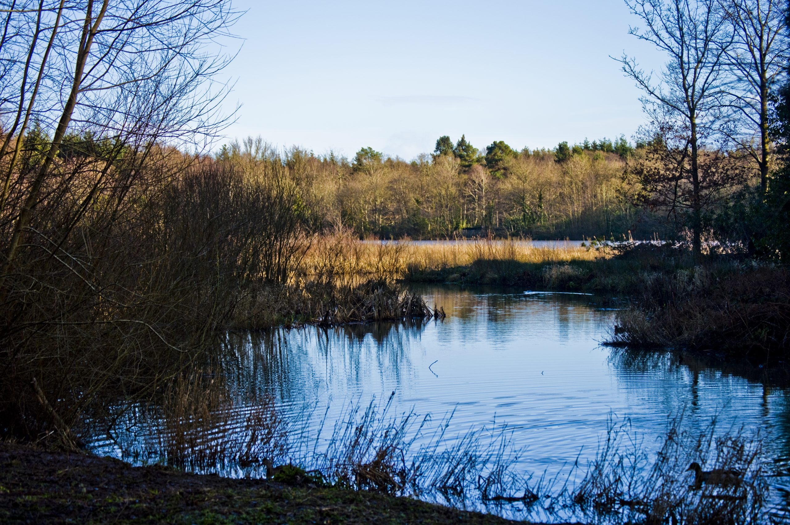 Stover Country Park Lake